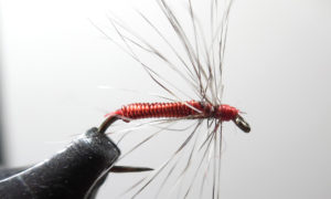 lil-easy-wrong-hackle